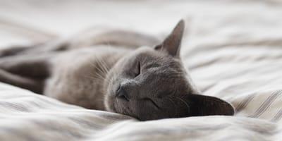 ¿Prefieres un gato tranquilo o un poquito hiperactivo?