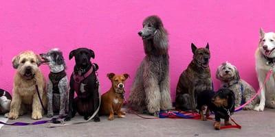 Haz el test: ¿Qué raza de perro va contigo?