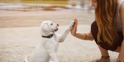 ¿Tienes experiencia educando perros?