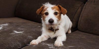 Si el perro pierde pelo...